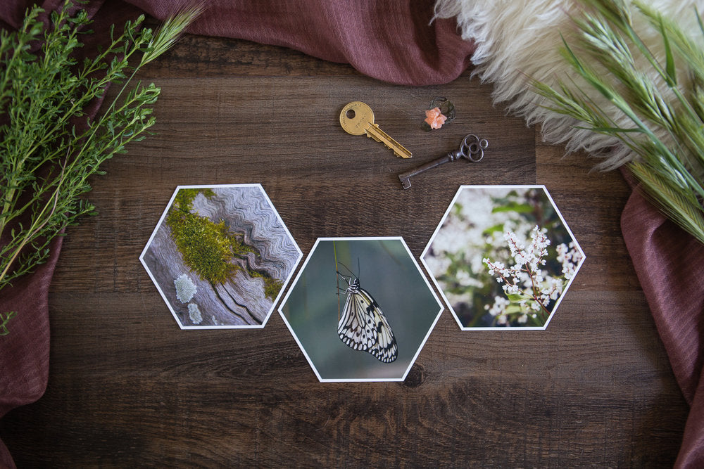 Anika Mini Collection of Hexagon Photo Prints