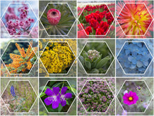 Load image into Gallery viewer, Fleur Hexagon Calendar Collection