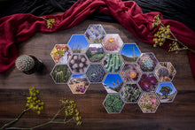 Load image into Gallery viewer, Zabrina Grand Collection of Hexagon Photo Prints
