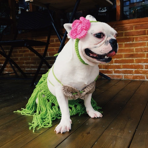 Danceuse Hawaienne Costume Bouledogue Francais