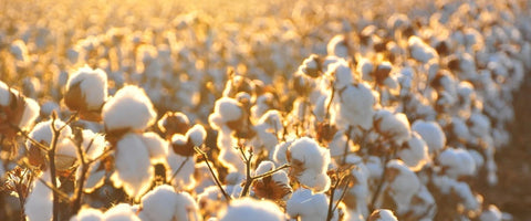 what is egyptian cotton