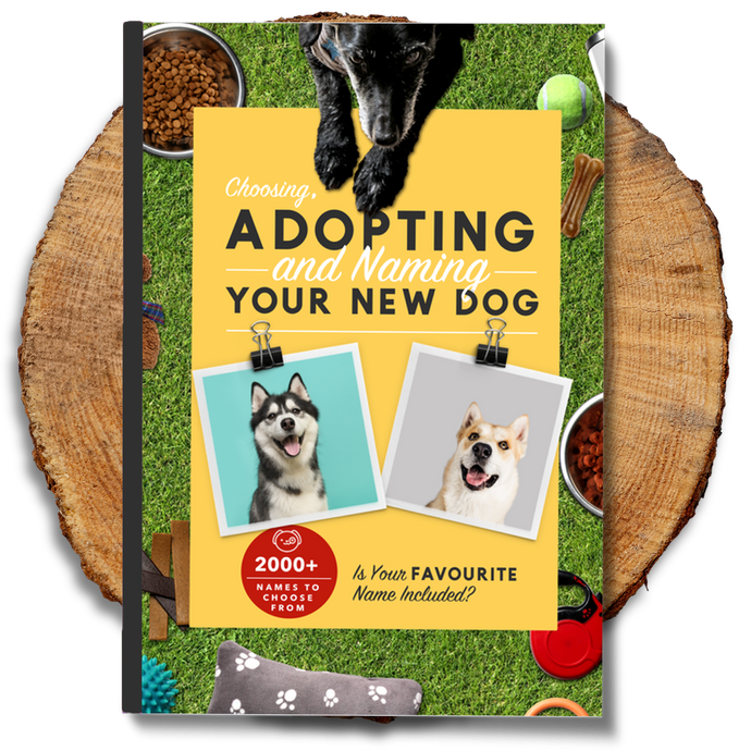 Choosing, Adopting and Naming Your New Dog Ebook