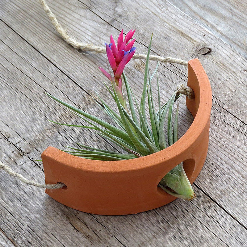 Terra Cotta Air Plant Cradle (2 sizes)