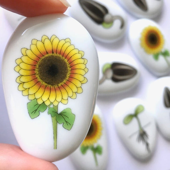 Story Stones - Sunflower Lifecycle