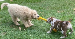 pet toys for dogs online