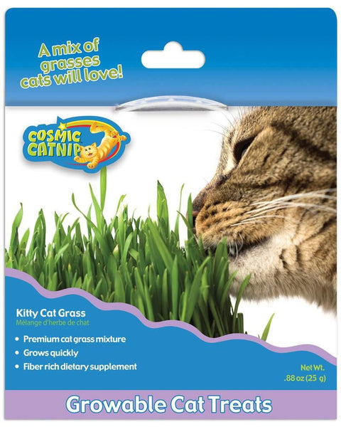 OurPet's Cosmic Kitty Cat Grass.