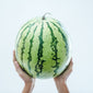 Watermelon - Sold per piece