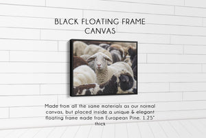 Flock of Sheep CUSTOM GIFT PRINTS DenverToDallas BLACK FRAMED CANVAS 12X16
