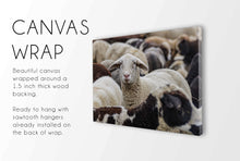 Load image into Gallery viewer, Flock of Sheep CUSTOM GIFT PRINTS DenverToDallas CANVAS WRAP 12X16