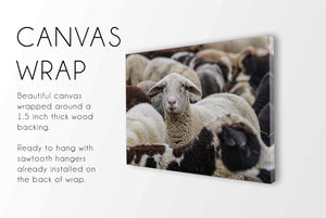 Flock of Sheep CUSTOM GIFT PRINTS DenverToDallas CANVAS WRAP 12X16