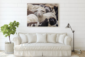 Flock of Sheep CUSTOM GIFT PRINTS DenverToDallas
