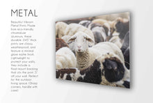 Load image into Gallery viewer, Flock of Sheep CUSTOM GIFT PRINTS DenverToDallas METAL 12X18