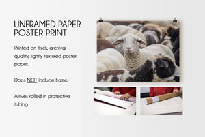 Flock of Sheep CUSTOM GIFT PRINTS DenverToDallas UNFRAMED PAPER POSTER PRINT 12X18