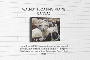 Flock of Sheep CUSTOM GIFT PRINTS DenverToDallas WALNUT FRAMED CANVAS 12X16