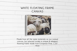 Flock of Sheep CUSTOM GIFT PRINTS DenverToDallas WHITE FRAMED CANVAS 12X16