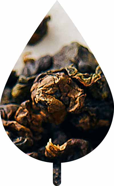 Intriguing Oolong Tea