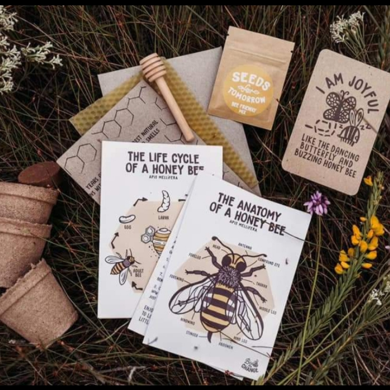 Life Cycle of the Honey Bee - Downloadable