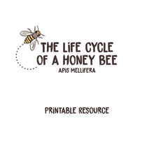 Load image into Gallery viewer, Life Cycle of the Honey Bee - Downloadable