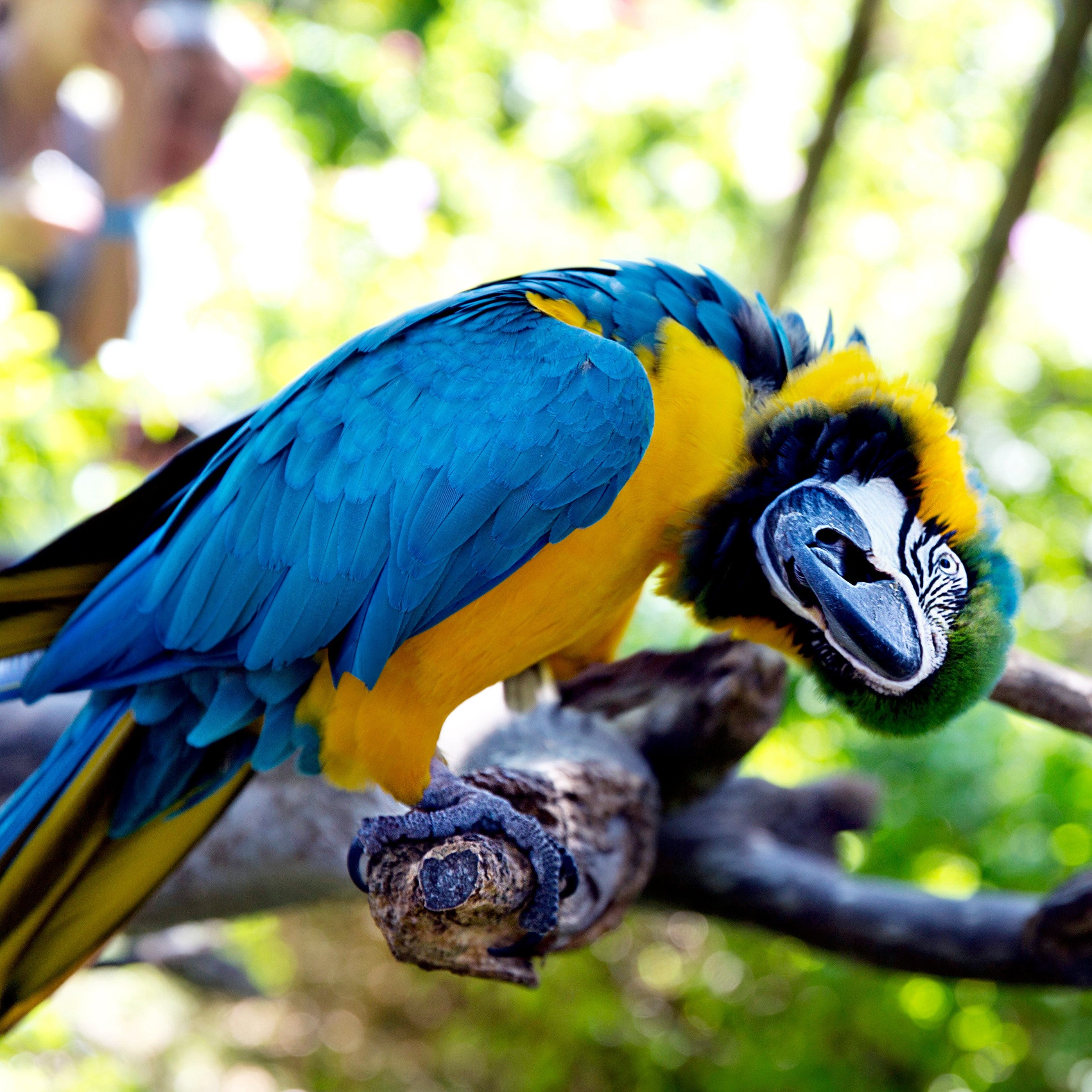 inquisitive looking parrot