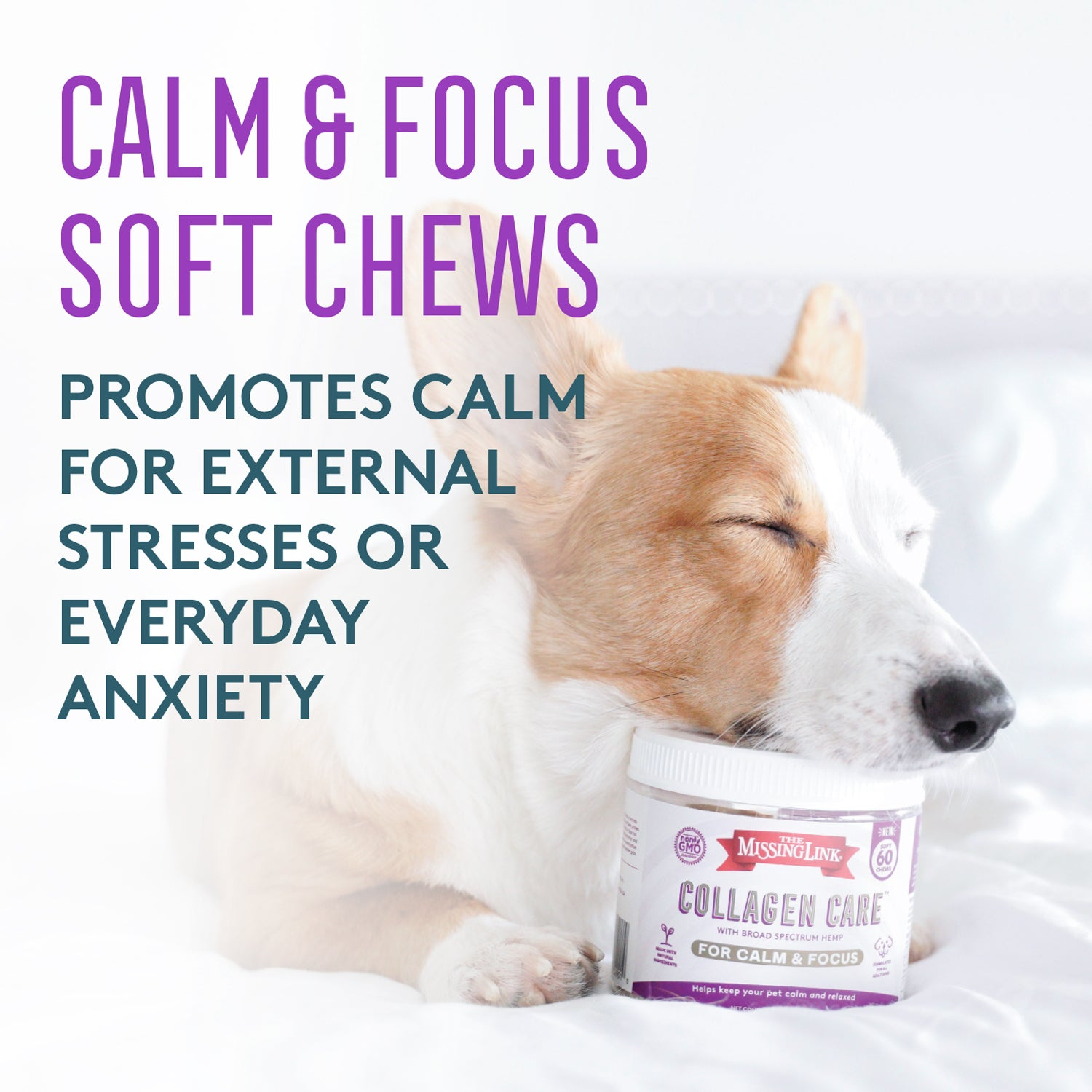 Collagen Care Calm & Focus dog