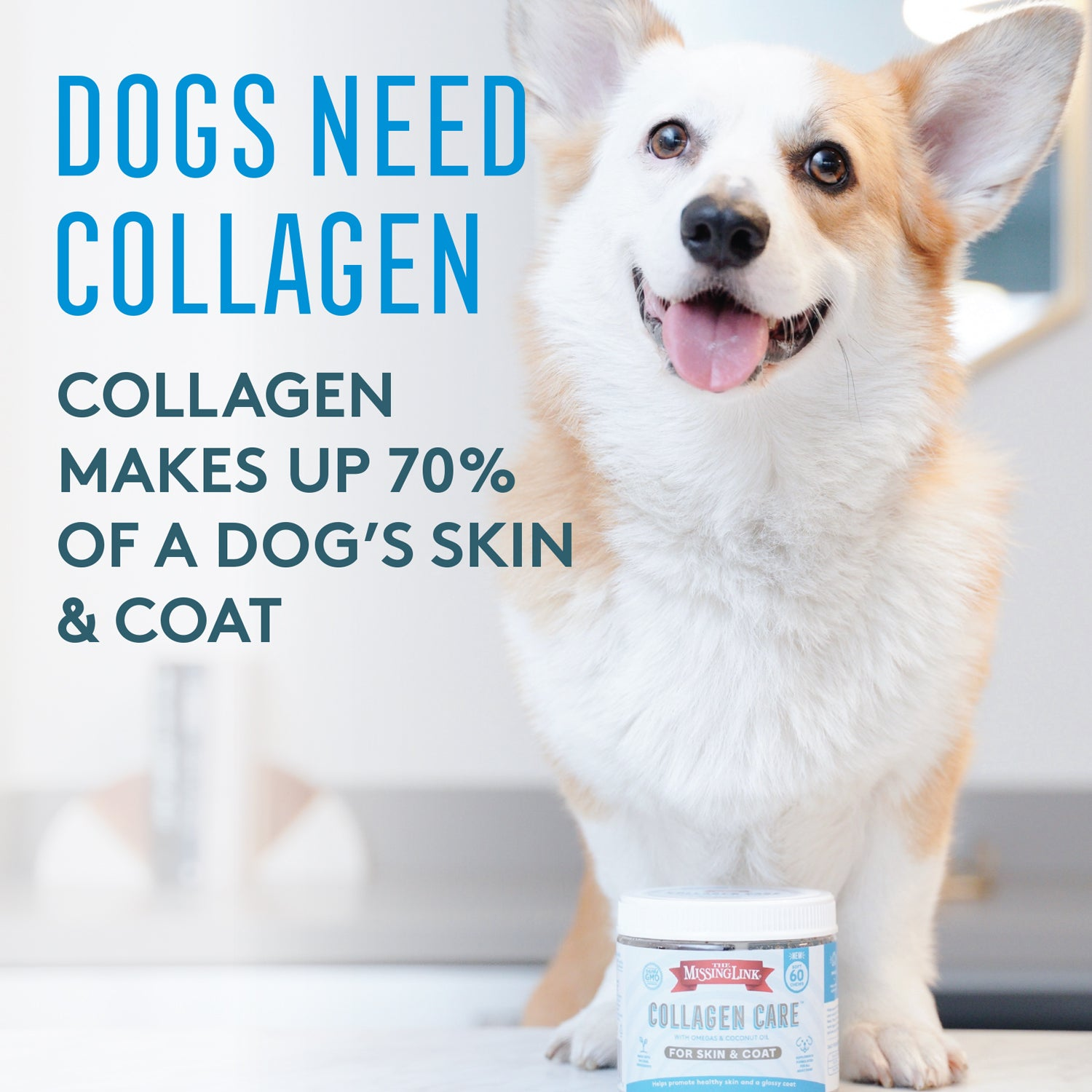 Collagen Care Corgi