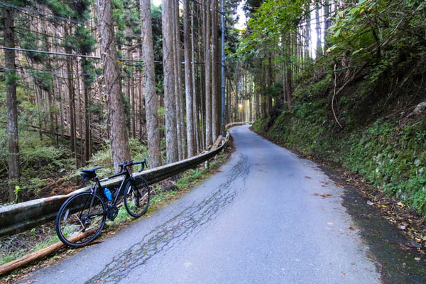 The isolated forests found on Kyoto cycling paths.