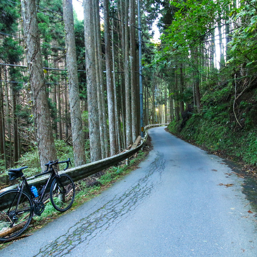 Perfect winding forest roads for cycling.