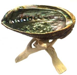 Abalone Shell w Stand