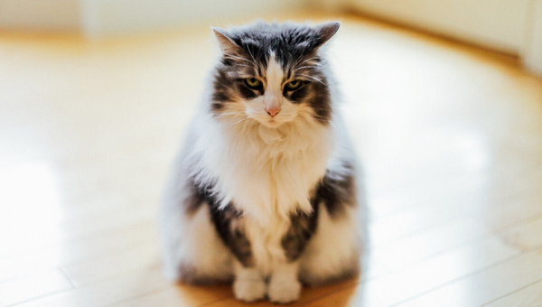Are the floor cleaners harmful to your pets?