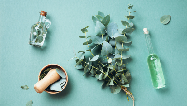 5 incredible uses of eucalyptus oil - all at Home