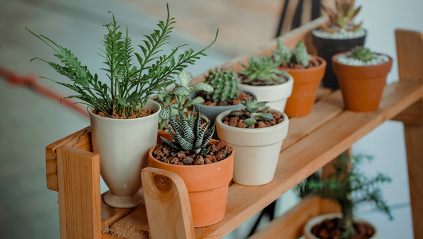 5 Natural houseplant fertilizers for your indoor plants