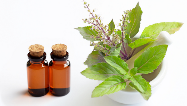 Top 5 Benefits of Basil Essential Oil
