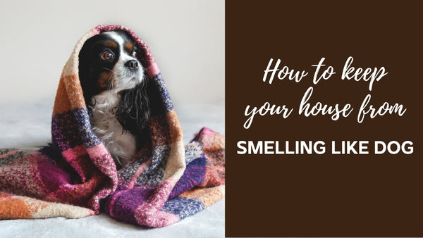 How to Keep Your House From Smelling Like Dogs