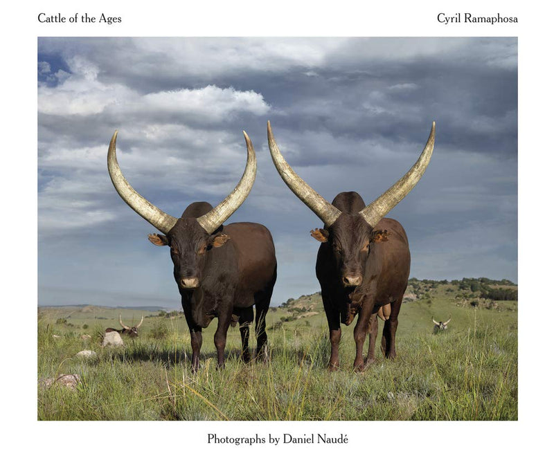 CATTLE OF THE AGES, Ankole cattle in South Africa, photographs by Daniel Naudé