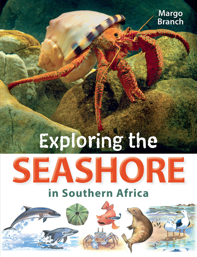 EXPLORING THE SEASHORE, in southern Africa
