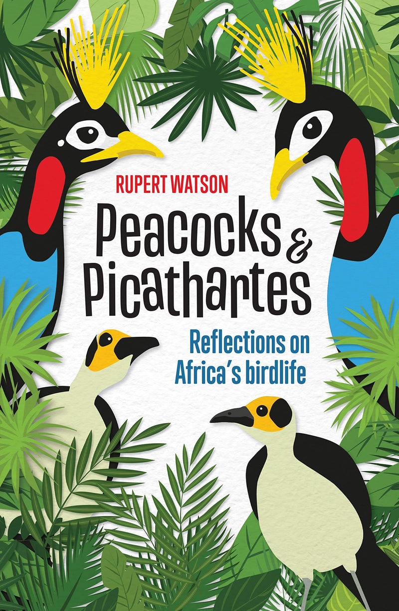 PEACOCKS & PICATHARTES, reflections on Africa's birdlife