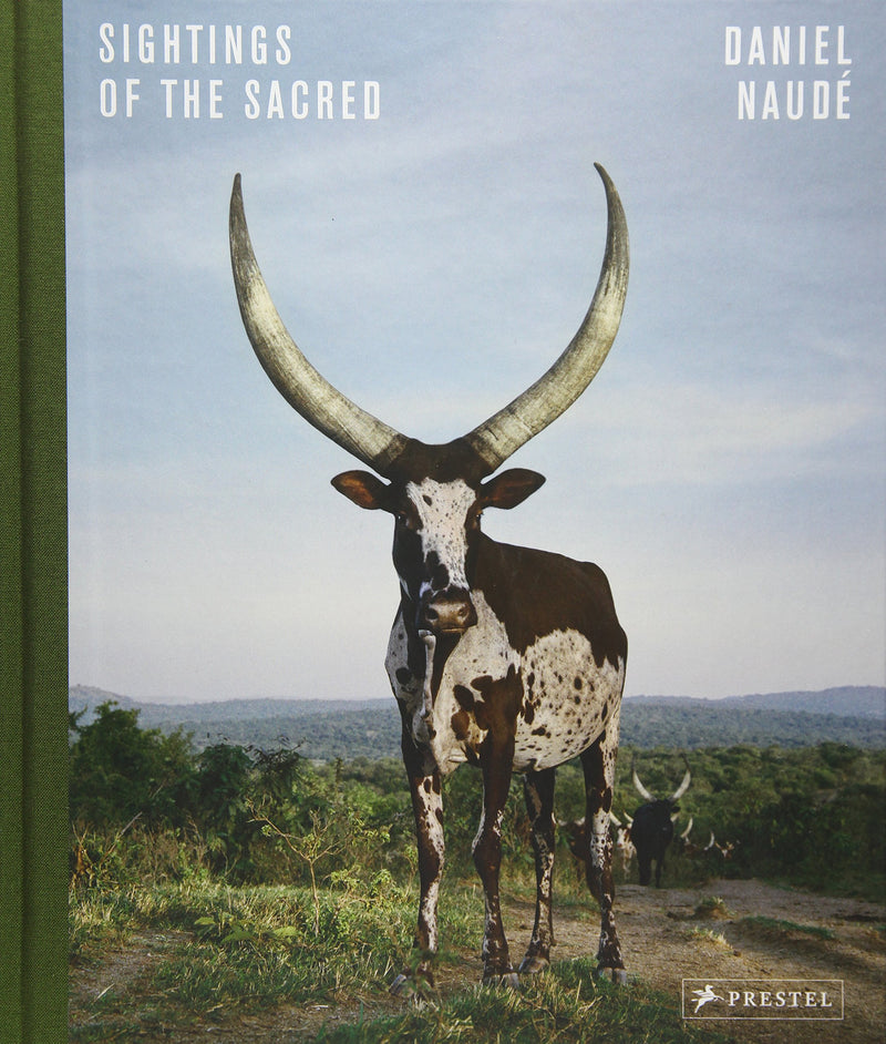 SIGHTINGS OF THE SACRED, cattle in Uganda, Madagascar and India