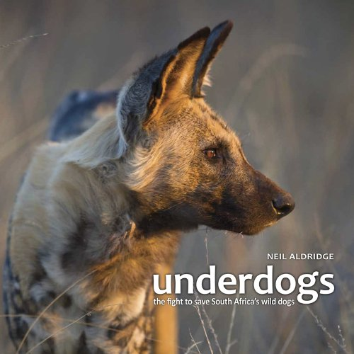 UNDERDOGS, the fight to save South Africa's wild dogs