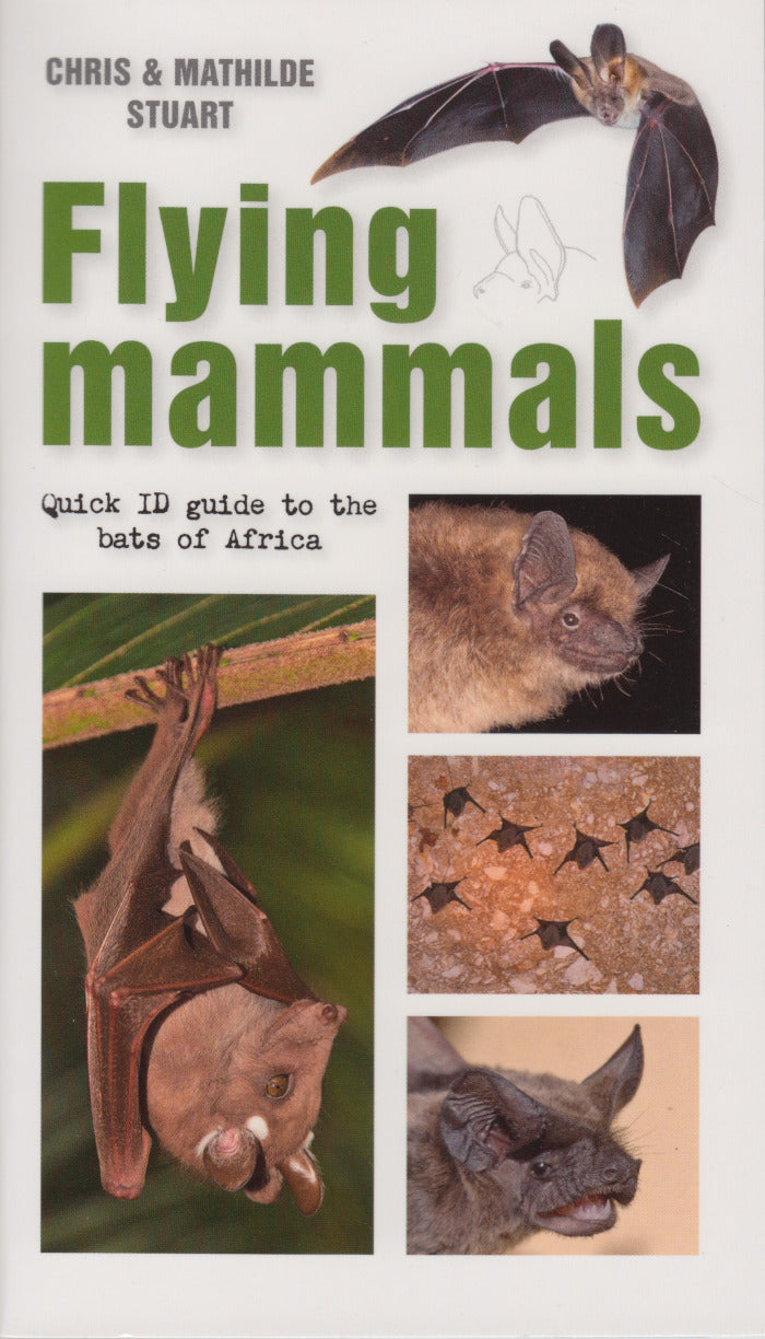 FLYING MAMMALS, quick ID guide to the bats of Africa