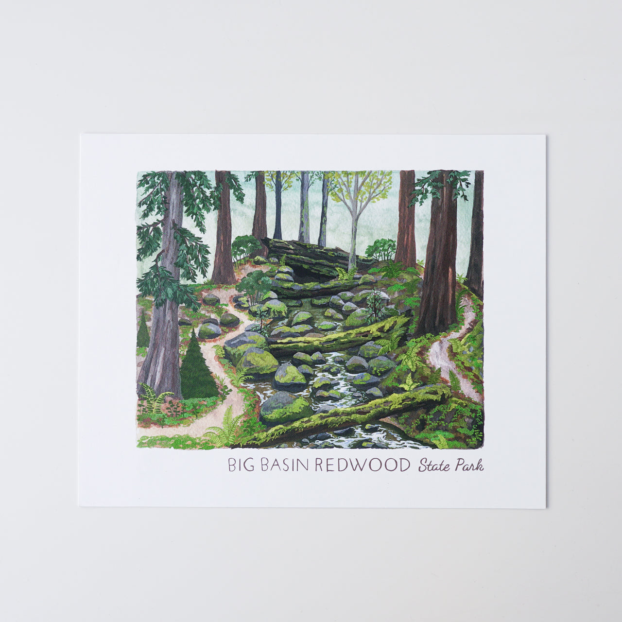 Big Basin Redwoods Print
