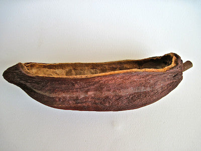 Your own Hollow Cacao Pod - (without chocolate)