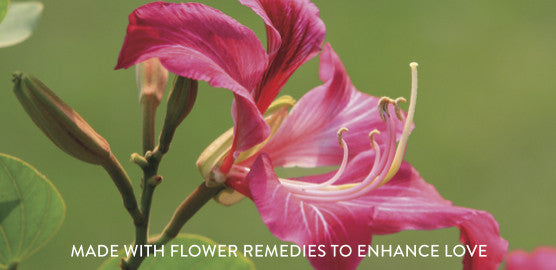 Wei Love Hong Kong orchid flower remedy