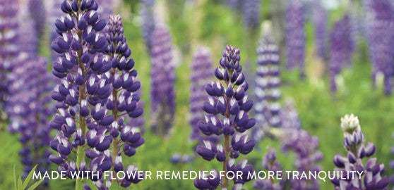 Wei Peace arctic lupine flower remedy