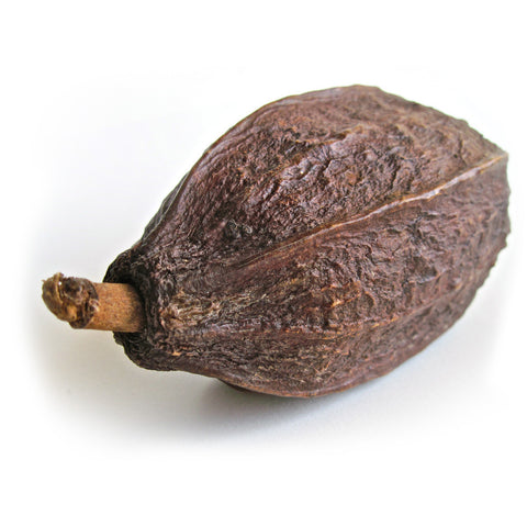 Whole Cacao Pod - without chocolate