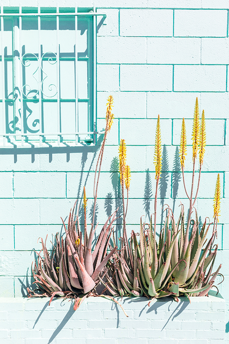 New! Zollman's sunny succulents give back to an amazing org.