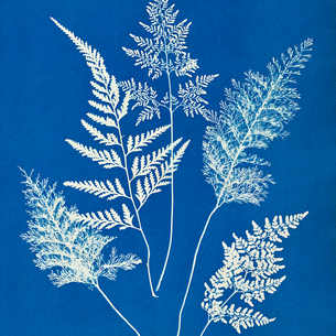 Ceylon by Anna Atkins