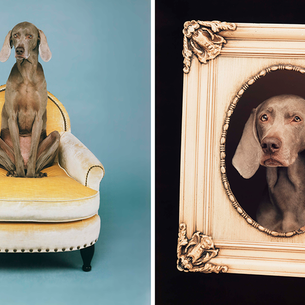 New! William Wegman captures a portrait + a pose