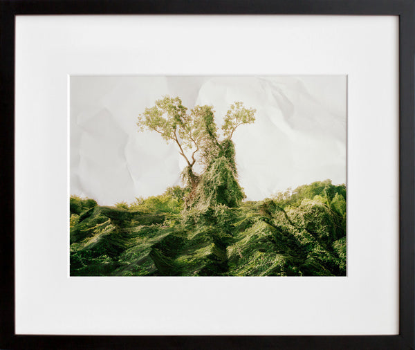 Response to Print of Kudzu, Texas