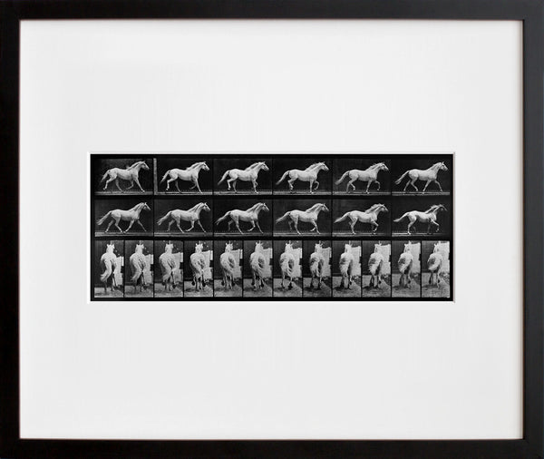 Animal Locomotion: Plate 596 (Horse)