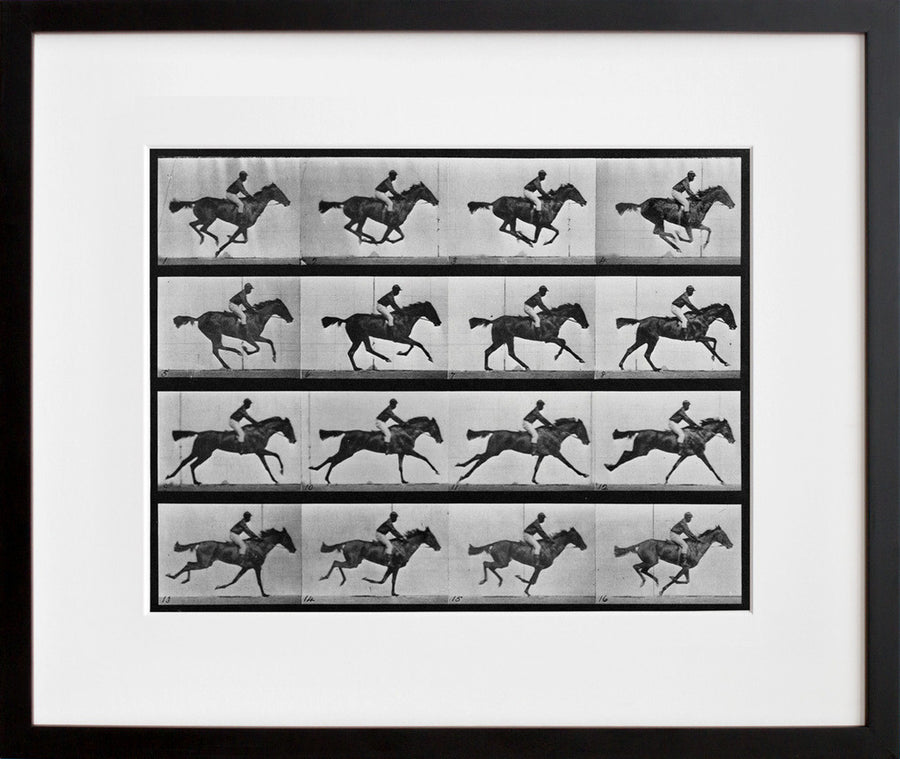 Animal Locomotion: Plate 626 (Galloping Horse)